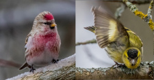 2020_09 talven linnut.jpg